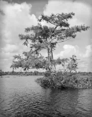 swamp2bw