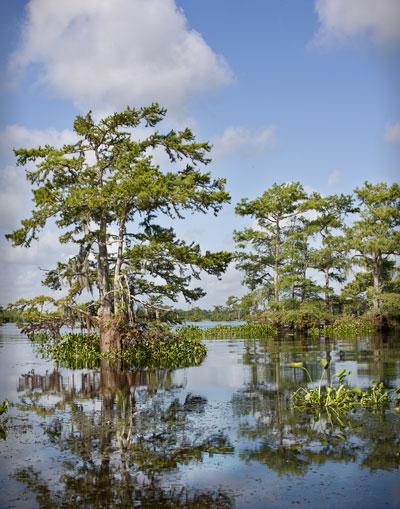 swamp3